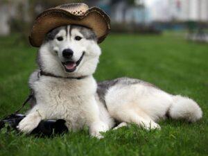 Trung tâm huấn luyện chó quận 7 chuyên nghiệp, uy tín