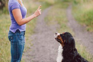 Trung tâm huấn luyện chó quận 9 chuyên nghiệp, uy tín