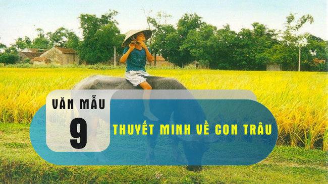 Bài văn thuyết minh về con trâu ở làng quê Việt Nam số 1